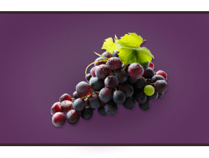 Red Grape Concentrate Manufacturers