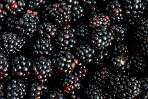 blackberry concentrate suppliers