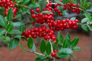 cranberry concentrate suppliers
