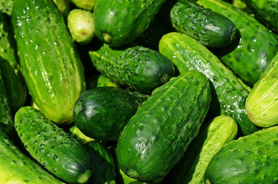 cucumber puree manufacturer