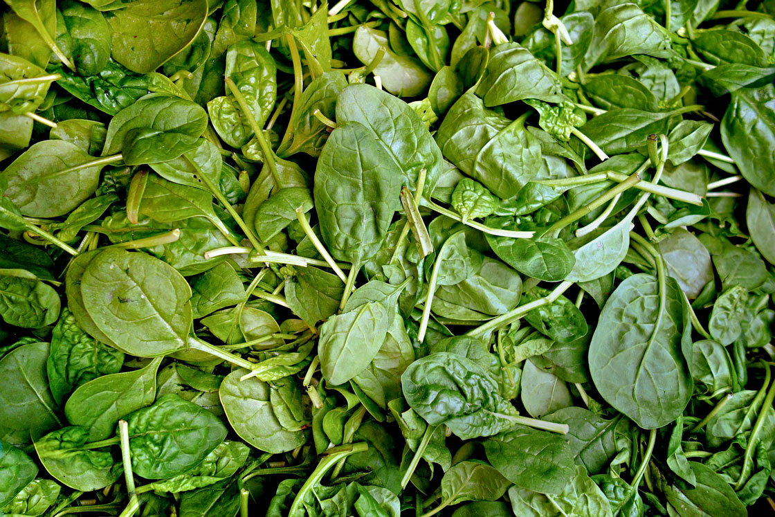 spinach puree manufacturer