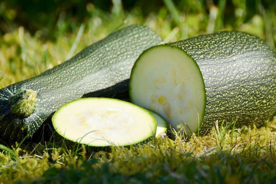 zucchini puree supplier