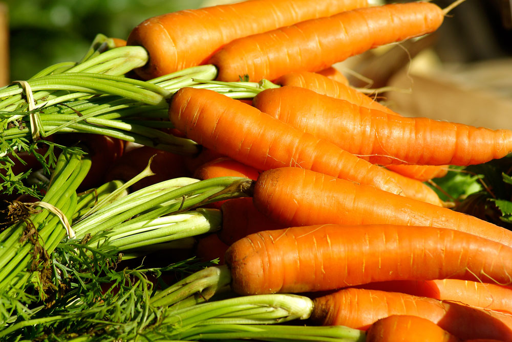 orange carrot compound supplier